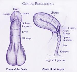 genital-reflexology